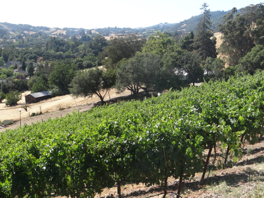 jones-bazzano vineyard
